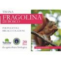Tisana Fragolina di bosco - VALVERBE